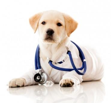 Állatgyógyszerek forgalmazása engedély nélkül