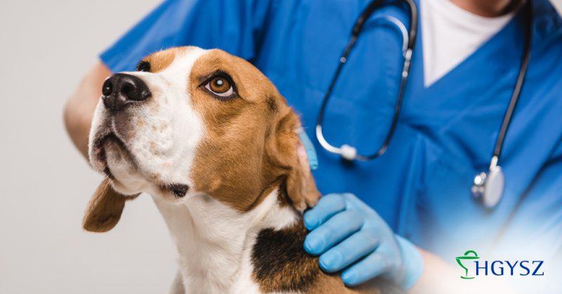 Átalakulás előtt az állatorvosi vényekkel kapcsolatos jogszabályi rendelkezések